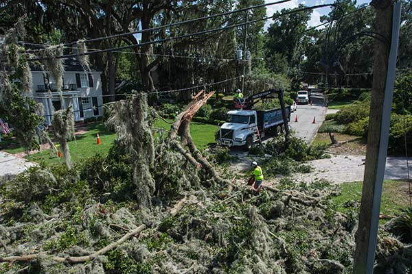 Lewis Tree Service providing emergency response services for a hazard tree after a storm