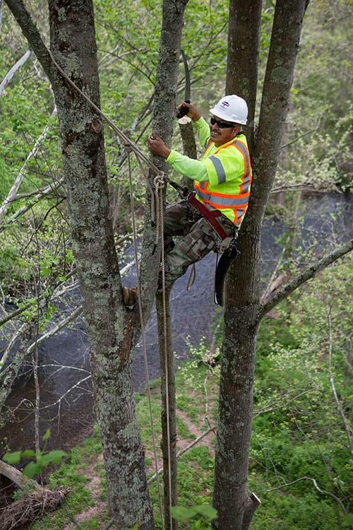 Lewis Tree crew member using safety equipment to perform vegetation management tasks