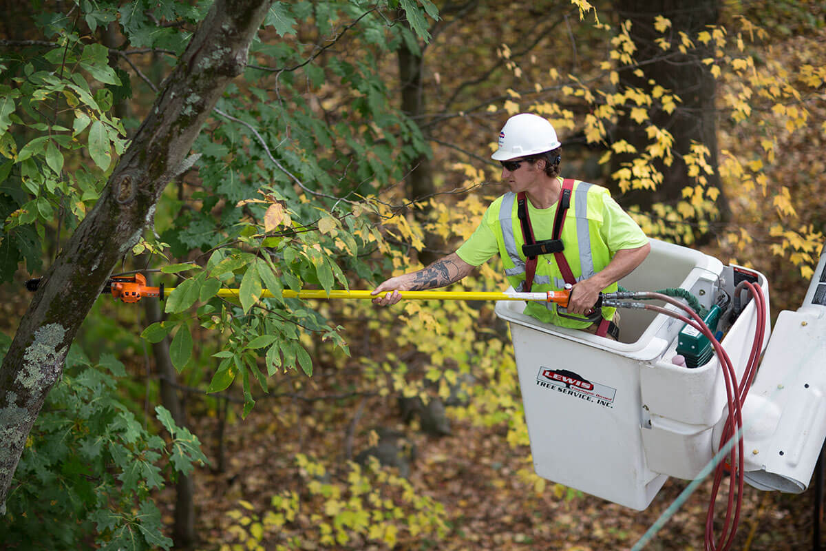 Utility vegetation management services for a rural cooperative being performed by a Lewis Tree Service crew member in a bucket truck with a pole saw